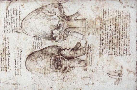 AnatomyOfTheHeart