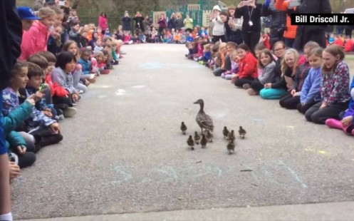 160509235833-ducklings-elementary-school-guide-jnd-orig-vstan-00001024-full-169