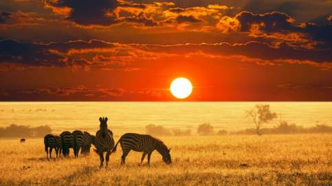 247175-african-safari-sunset